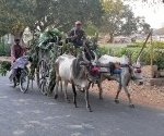 Bullock carts are common in Hampi, giving and idea of just how rural the are around once great  city has become