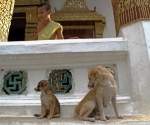 A novice, a mother and her pup at Wat Siphhoutthabath