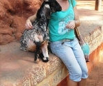 a-chat-with-a-friendly-goat