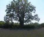 lavender-field-2