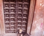 A pariah dog takes shelter in a doorway