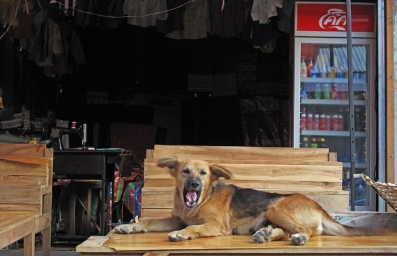 A yawning dog on a market table