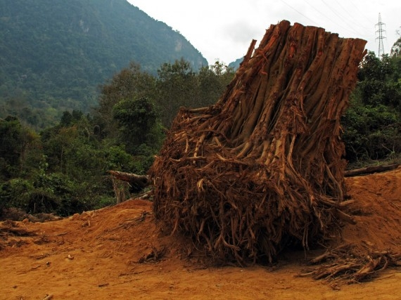 The uprooted stump of a huge tree, with power pylons in the background, on the way to Henri Mouhot's grave