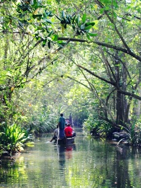 Kerala's backwaters