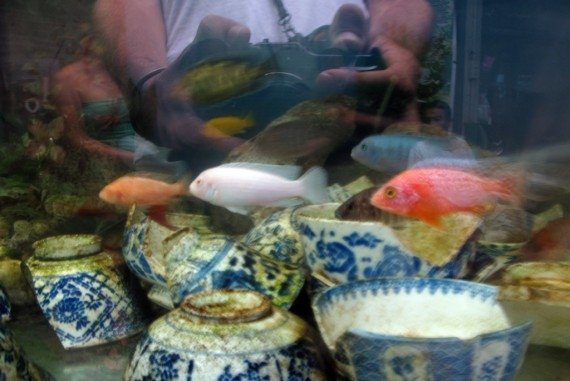 A fish tank in Bangkok's Chinatown